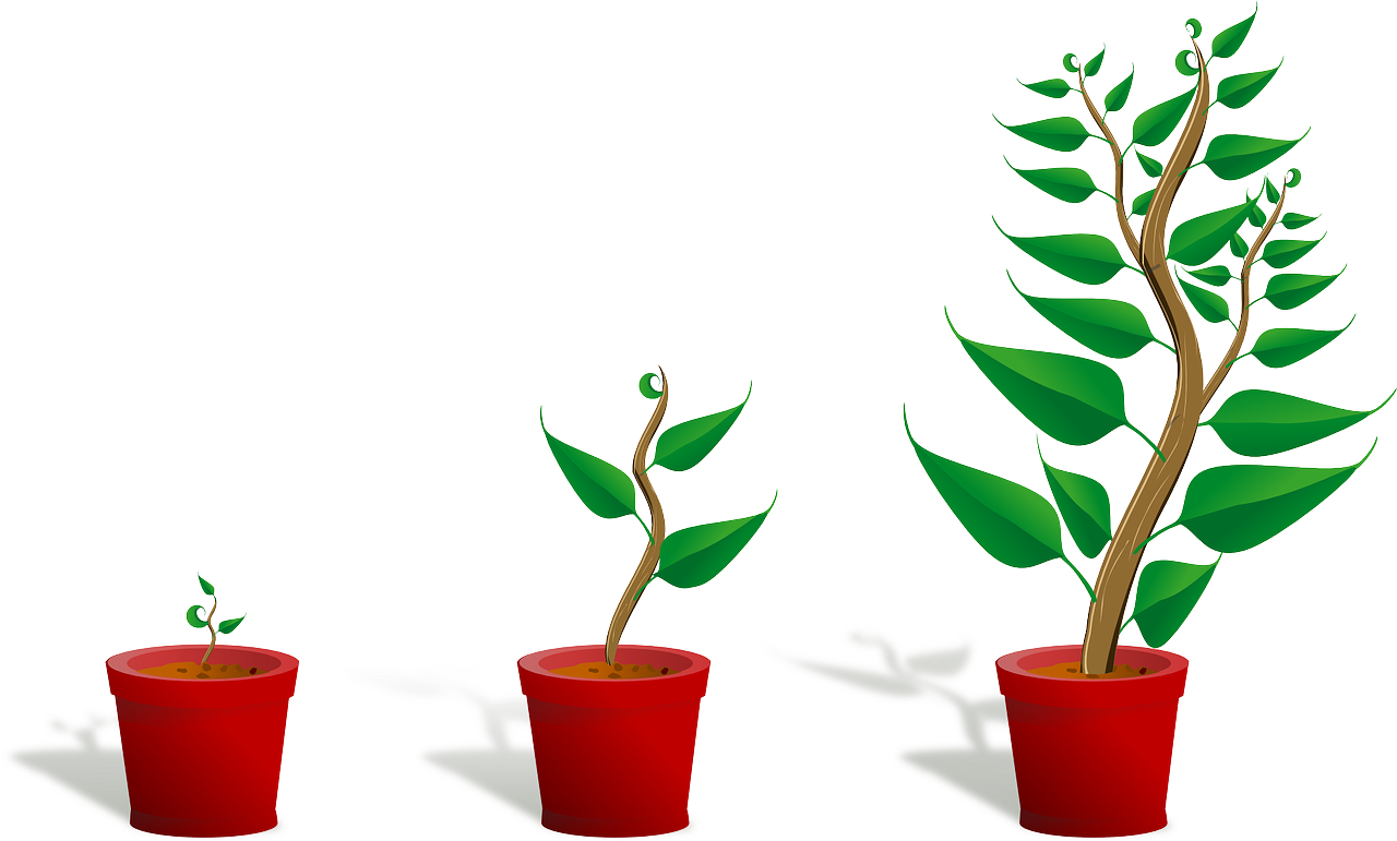 Développement : grandir et avancer